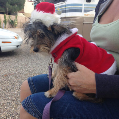 Happy holidays in Tucson. (Peanut's wondering if he was better off at the pound)