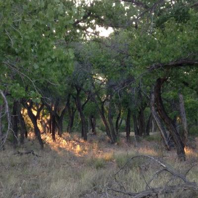 Paseo del Bosque, Albuquerque