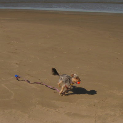 Did I tell you that Peanut loves the beach?