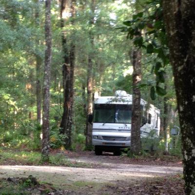 Spooky Native Woods RV site, Darien