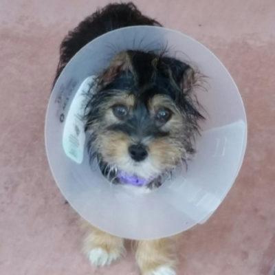 Anyone feel like a martini? Peanut, fresh from Tucson's Humane Society