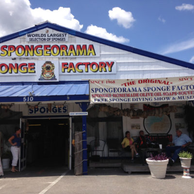Everything you ever wanted to know, or didn't, about sponges