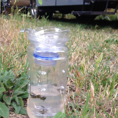 We made our own wasp trap; didn't make a difference