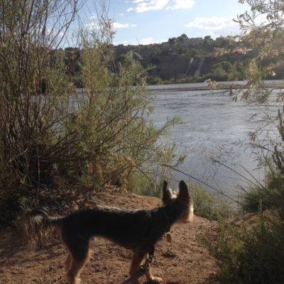 Peanut likes the Rio Grande, Albuquerque